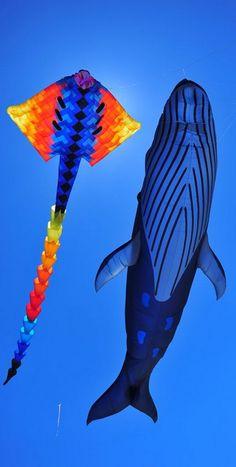 Kite Surf, Go Fly A Kite, Air Balloon, Balloons, Balloon Lanterns, Kites Craft, Le Vent Se Leve, Kites For Kids, Kite Designs
