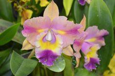 exposicion de orquideas - Google Search