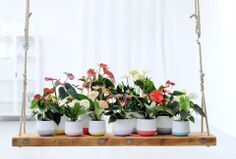 #Anthurium Some Flamingo Flower varieties are traditionally used in medecines or to perfume tobacco. www.barendsen.nl