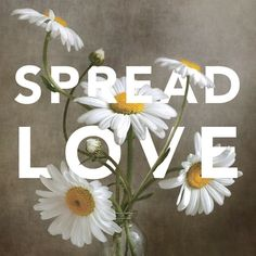 Spread Love Wall Art by Mandy Disher from Great BIG Canvas. Framed Prints, Canvas Prints, Big Canvas, Love Wall Art, Color Filter, Spread Love, Art Decor, Vibrant Colors, Abstract Art