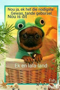 Good Night Sleep Tight, Goeie Nag, Goeie More, Afrikaans, Happy, Quotes, Teddy Bear, Awesome, Garden