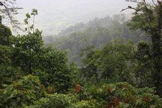 Setting: Monteverde Cloud Forest, Costa Rica