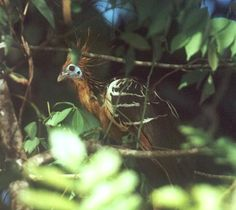 Some Important Mammal and Bird Species of Amazon Rainforest