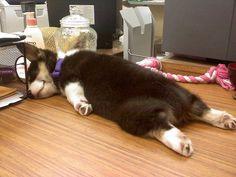 犬たちよ、その寝相で大丈夫なのか…心配になるほどぐっすり眠る写真25枚 - ライブドアニュース