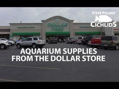 Aquarium Supplies from the Dollar Store Aquarium Shop, Home Aquarium, Aquarium Fish, Aquarium Supplies, Wet Dreams, Cichlids, Freshwater Aquarium, Fish Tank, Dollar Stores