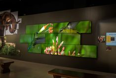 exhibition graphics at entry museum - Google Search
