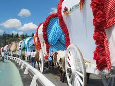 Row of carretas (gypsy wagons) heads out of Seville to the hills on th way to el Rocio.