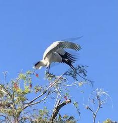 Stork Bird, Animals, Animales, Animaux, Animal, Animais