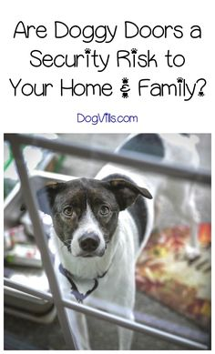 Doggy doors: are they a security risk to your family and your belongings? Find out just how safe these convenient dog accessories really are!