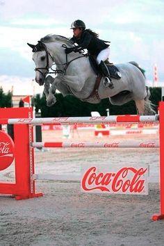 Hunter jumper eventing horse equine grand prix dressage
