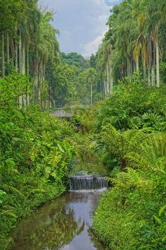 Bellos paisajes, jardines temáticos y  una de las mayores colecciones botánicas del estado de Sao Paulo en Brasil.