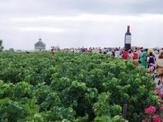 Marathon du Medoc- Marathon in France - wine tasting every steak and oysters at the end - If I ever run a marathon, it would be this one! Marathon Running, Wine Tasting, Oysters, Bordeaux, Charity, Steak, Dolores Park, Trail, Bucket