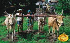 VILLAGE LIFE IN INDIA - EnglishClub
