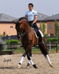 dressage - amazing reach and look at that neck!