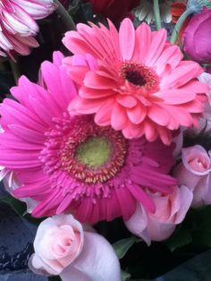 Margaritas flores rosas