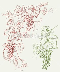Image detail for -stock-illustration-10496315-grapevine-line-art.jpg