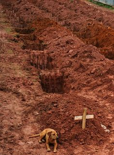 """A dog named """"Leao"""" sits for a second consecutive day at the grave of her owner, who died in the disastrous landslides near Rio de Janiero on January 15, 2011"""