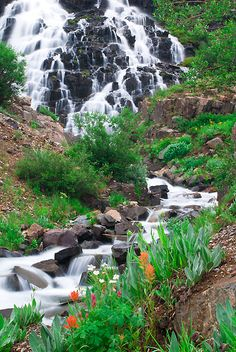 Flowers and the lower falls in Yankee Boy Basin near Ouray, CO.