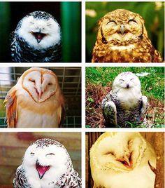 Owls having a hoot