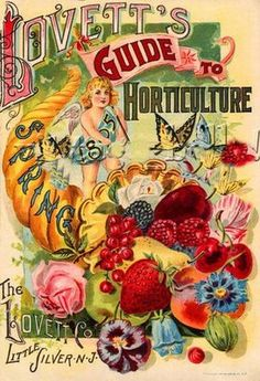 I found the greatest website today with the most beautiful vintage graphics ...    somelikeitpretty.blogspot.com