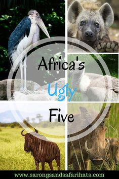 African has the Big Five and the Little Five, but have you heard of The Ugly Five? These five creatures are vitally important on the African plains and each is quite incredible in it's own right. Safari Hat, Victoria Falls, African Safari, Zimbabwe, Africa Travel, Being Ugly, Countries, National Parks, Wildlife