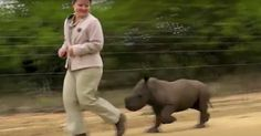 Rescued Baby Rhino at Hoedspruit Facility for Endangered Species May 2017 - mother killed by poachers Baby Rhino, Endangered Species, Happenings, Elephant, Shit Happens, Animals, Events, Animales, Animaux