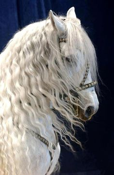 Beautiful Horse, took my breath away, beautiful