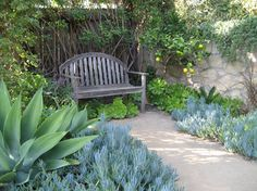 Blue foxtail agave and blue chalk sticks - patio garden