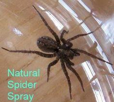 Natural Spider Spray