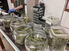Cannabis News, Medical Cannabis, Cannabis Oil, Cbd Oil For Sale, Buy Weed Online, Hemp Oil, Florida, Transport News, Michigan