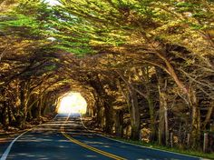 Harpreet Grewal: Tree Tunnel - Highway 1, CA: February 2013. It is located just north of MacKerricher State Park, Fort Bragg.