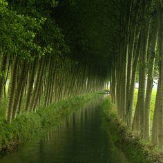 Green tunnel.