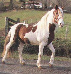 cheval pottok