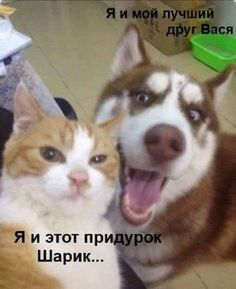 Funny Dog & Cat Selfie from Sun Gazing Funny Animals With Captions, Funny Cats And Dogs, Funny Captions, Funny Animal Pictures, Funny Memes, Funniest Memes, Funny Kitties, Cat Memes, Hilarious