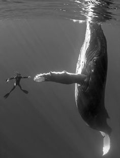 I will high five a whale