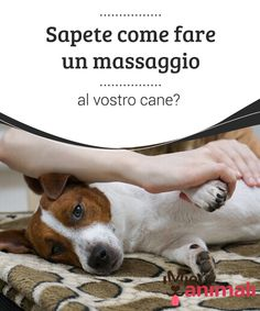 Sapete come fare un massaggio al vostro cane?   I #cani sono #animali a cui piace dipendere dai propri #padroni. E a loro piace coccolarli e prendersene cura. Ecco come fare un #massaggio al vostro cane. #Consigli