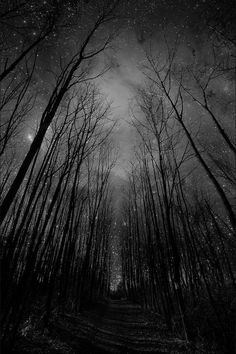 Gorgeous Starry Forest Night  so awesome i love it what do you guys think? :D