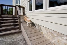 Pet-Friendly Remodeling Entries and Honorable Mentions | Remodeling | Competitions