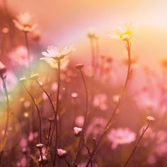 Nature Photography Wild flowers Meadow Pink Rainbow by Fizzstudio, $20.00