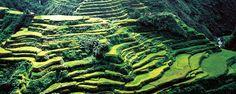 Luzon, Philippines - Reisterrassen