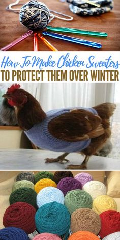 31a200095 How-To-Make-Chicken-Sweaters-To-Protect-Them-