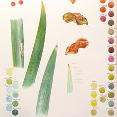 Making colour notes is an important part of what I do. It's so handy to look back and realise that that is what I used to get that particular shade of green, and in which order.