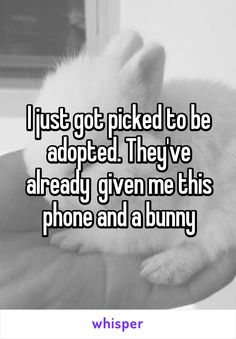 """I just got picked to be adopted. They've already given me this phone and a bunny."" Awww!!! How sweet!!!"