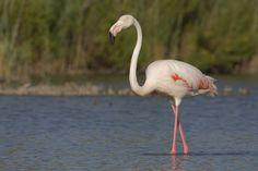 101452623.hG4rCrWC.flamingo9.jpg (3556×2368)