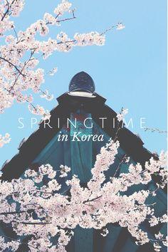 Springtime in Korea!
