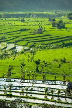 The area around Tirta Gangga holds some stunning rice paddy terraces