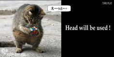 頭は使えば良くなります。頭を使うなら・・・  http://www.timein.jp/item/content/memo/980197024  timein.jp
