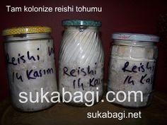 Reishi mantarı miseli satış