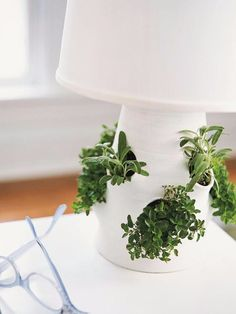 With a little creativity, you can turn your lamb into a indoor garden.