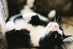 i have 2 black & white cats... love them!